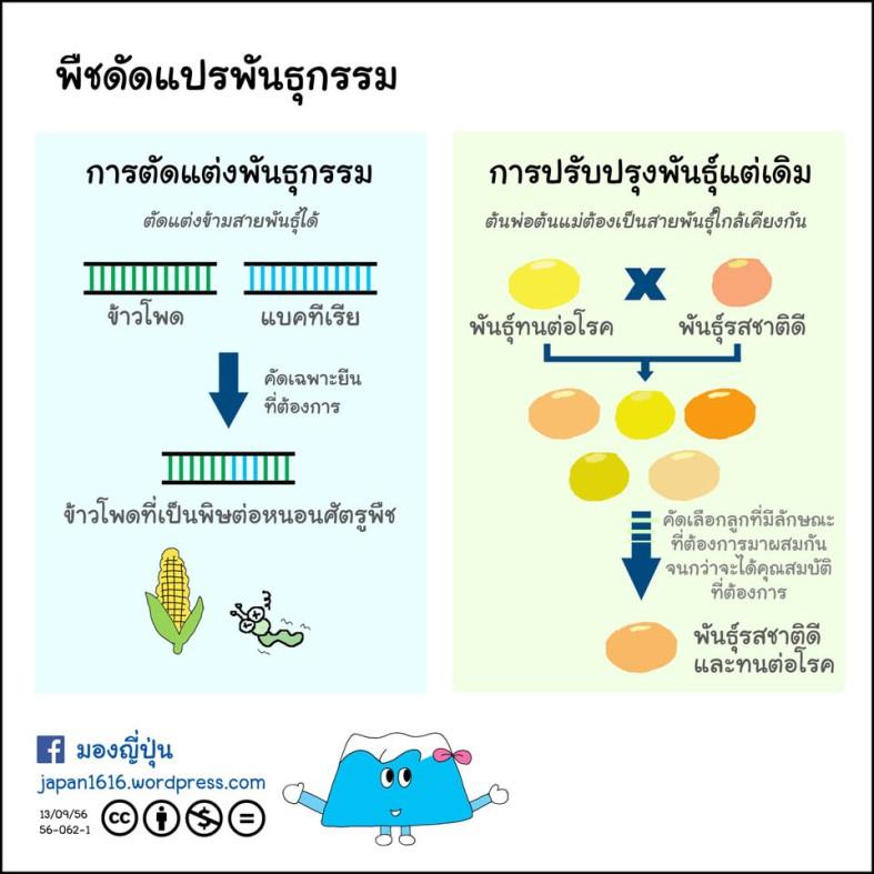 56-062 genetically modified plant พืชดัดแปรพันธุกรรม