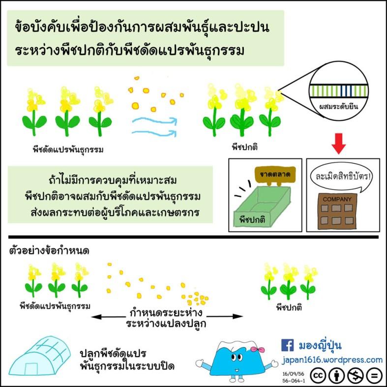 56-064 cross-pollination prevention กันการผสมพันธุ์ปะปนพืชดัดแปรพันธุกรรม