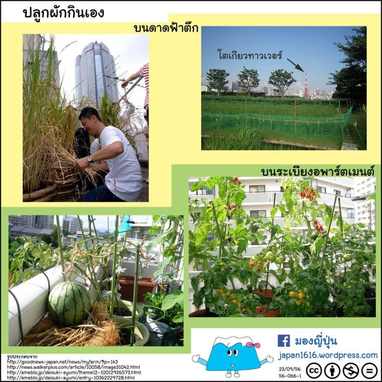 56-066 kitchen garden สวนผักในบ้าน