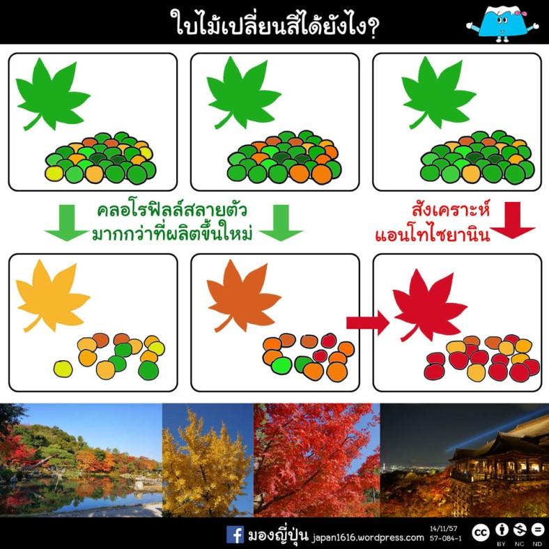57-084 autumn foilage